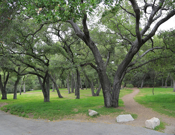 Oak Forest outdoor event space at Descanso Gardens in La Cañada Flintridge, CA