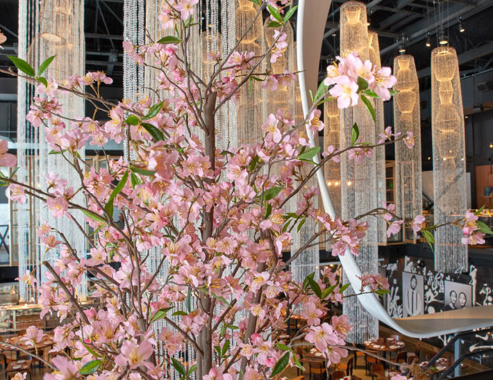 Cherry Blossoms | Sakura Festival