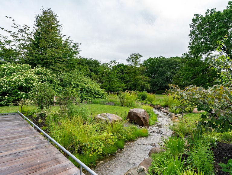 Stream at Brooklyn Botanic Garden