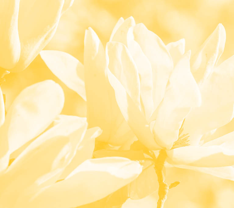 Yellow Magnolia Cafe Mailing List